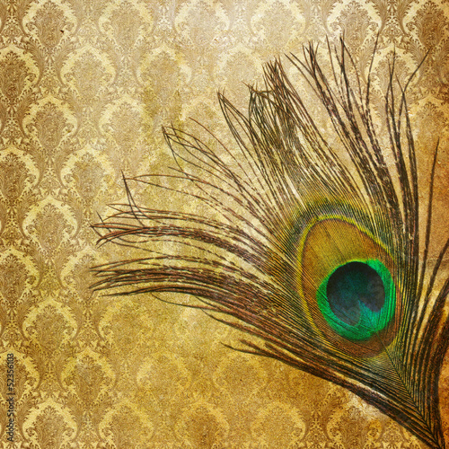 Vintage grunge peacock feather