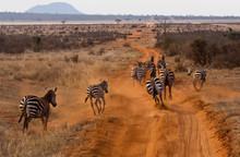 Zebre Kenya