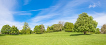 Panorama Of The Chestnut Tree At The Top Of The Hill