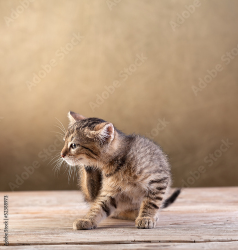 Small kitten sitting on wooden floor Poster