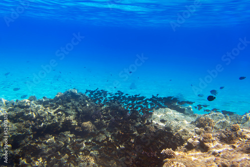 Coral reef of Red Sea with tropical fishes, Egypt