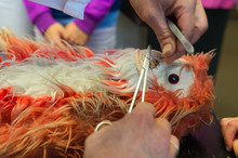 Operation Of A Stuffed Monkey
