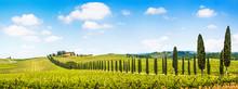Beautiful Landscape With Viney...