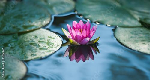Foto op Canvas Waterlelies ninfea fiore acquatico 9303