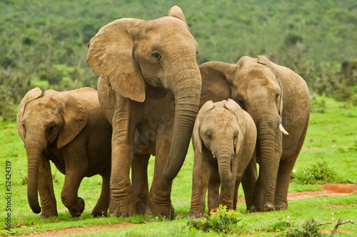 Photo  Elephant family