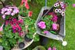 canvas print picture - Blumen Garten Pflanzen