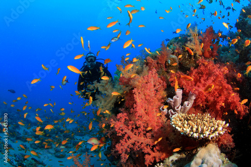 Tuinposter Koraalriffen Scuba Divers explore coral reef