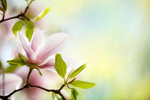 Ingelijste posters Magnolia Magnolien