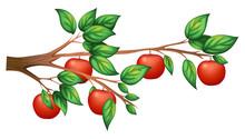 An Apple Tree