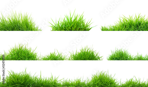 Cadres-photo bureau Herbe grass