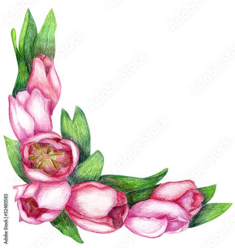 recznie-rysowane-rogu-tulipan