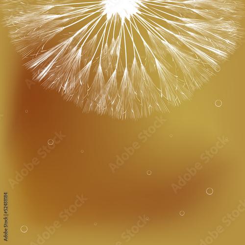 Dandelion and bubbles