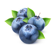 Isolated Blueberries. Four Fre...