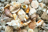 Fototapeta Bathroom - Background of sea shells