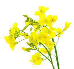 Fototapeta Blüten