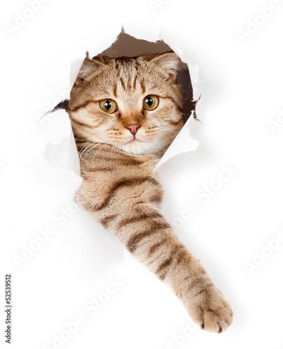 kot-w-bialej-tapecie