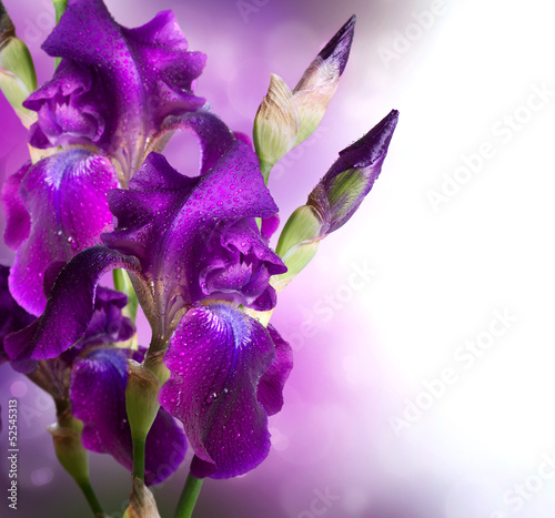 Deurstickers Iris Iris Flowers Art Design. Beautiful Violet Flower