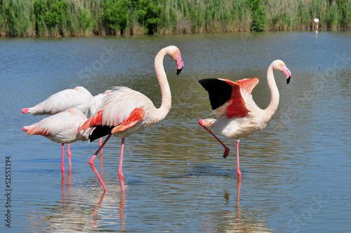 Papiers peints Flamingo Flamants roses de Camargue.