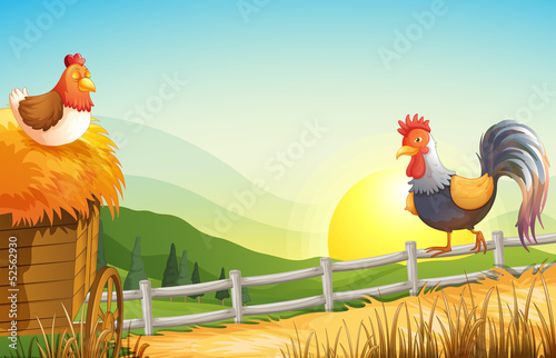 A hen and a rooster in the farm Canvas Print