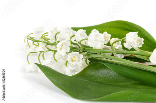 Wall Murals Lily of the valley Blooming Lily of the valley