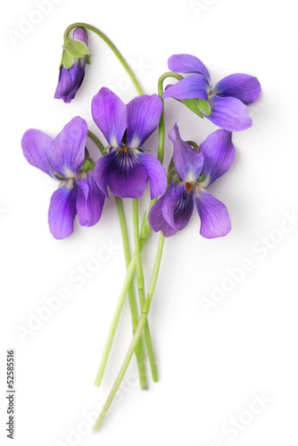 Papiers peints Pansies Bunch of Violets