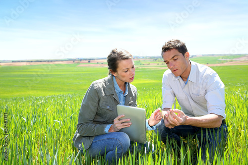 Fotografie, Obraz  Agronomist looking at wheat quality with farmer