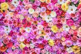 Fototapeta Kwiaty - Ściana kwiatów