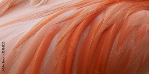 Photo sur Toile Flamingo Close up pink flamingo