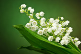 Fototapeta Kwiaty - Konwalie