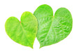 canvas print picture - two leaves in shape of hearts isolated on white background