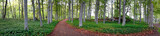 aspen trees in park - 52655505