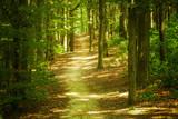Krajobraz lasu - 52681781