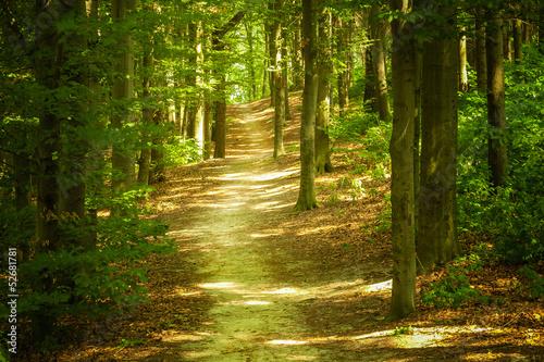 Papiers peints Route dans la forêt Forest landscape