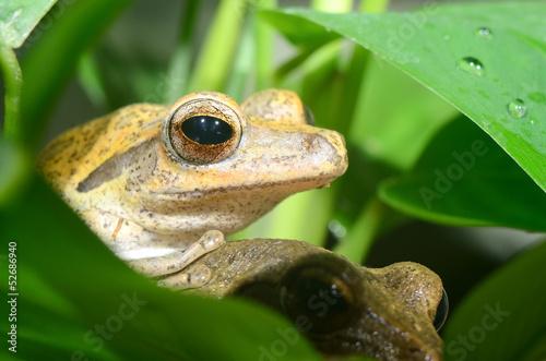 Tuinposter Kikker Colorful frog in terrarium