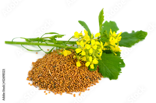 Photo  Mustard flowers and seed.