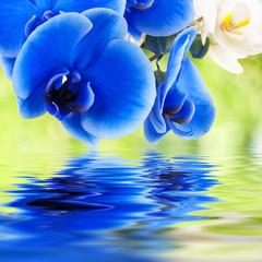 Fototapetabouquet de orquídeas y agua