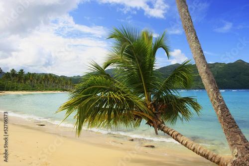 Fotografie, Obraz  Leaning palm tree at Rincon beach, Samana peninsula