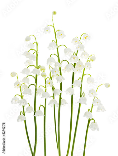 Wall Murals Lily of the valley Lily-of-the-valley flowers on white
