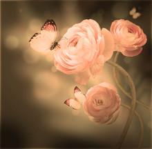 Bouquet Of Pink Roses Against A Dark Background  Butterfly