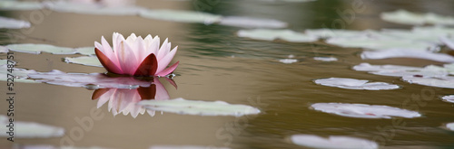 Photo Stands Water lilies Lotusblüte Banner Hintergrund