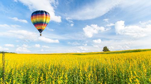 Poster Montgolfière / Dirigeable Hot air balloon over yellow flower fields against blue sky