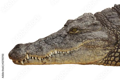 Poster Crocodile photograph of the head of a nile crocodile