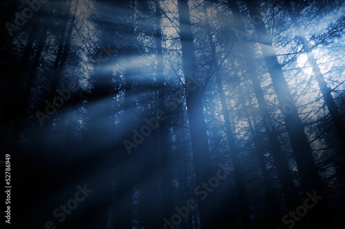 Foto op Canvas Weg in bos Mysterious pine wood