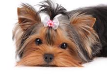 Portrait Of Cute Puppy