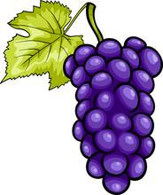 Blue Grapes Fruit Cartoon Illustration