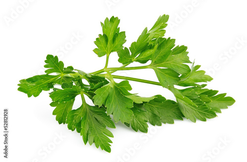 Fotografía  Fresh parsley herb