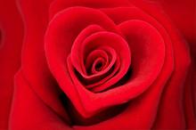 Rose Rouge Forme Coeur