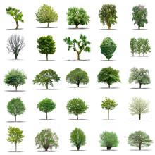 Lot D'arbres Sans Feuilles Sur...
