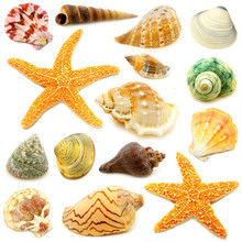 Assortment Of Sea Shells Indiv...