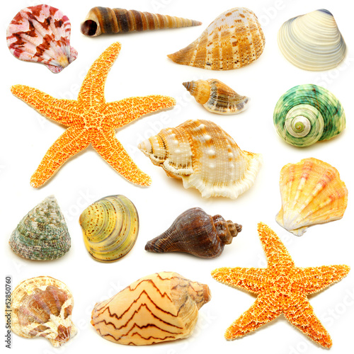 Fotografie, Obraz  Assortment of sea shells individually isolated on white